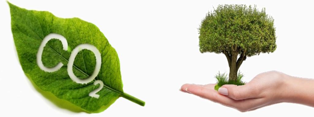co2 vasthoudend, co2 en houten kozijnen, CO2 vriendelijk, milieu vriendelijk kozijn,